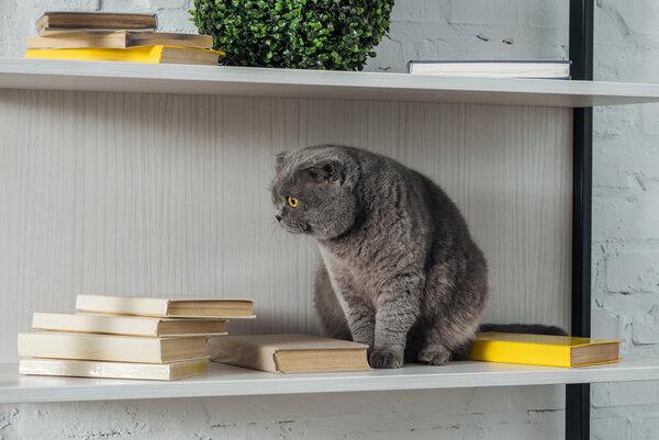 organisera dina böcker
